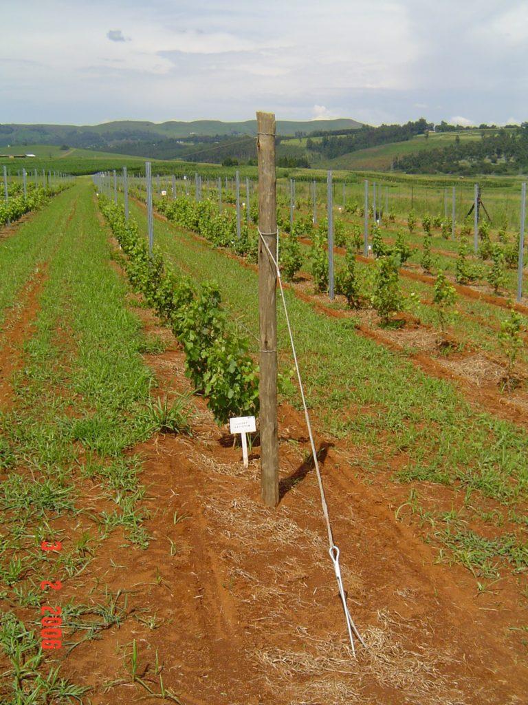 農業杭控えアンカーワイヤロープ